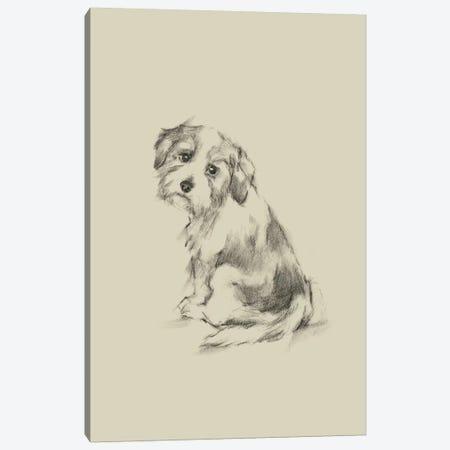 Puppy Dog Eyes III Canvas Print #EHA550} by Ethan Harper Canvas Art