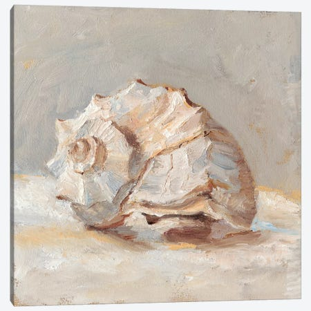 Impressionist Shell Study II Canvas Print #EHA575} by Ethan Harper Canvas Art Print