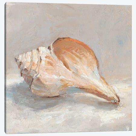Impressionist Shell Study III Canvas Print #EHA576} by Ethan Harper Art Print