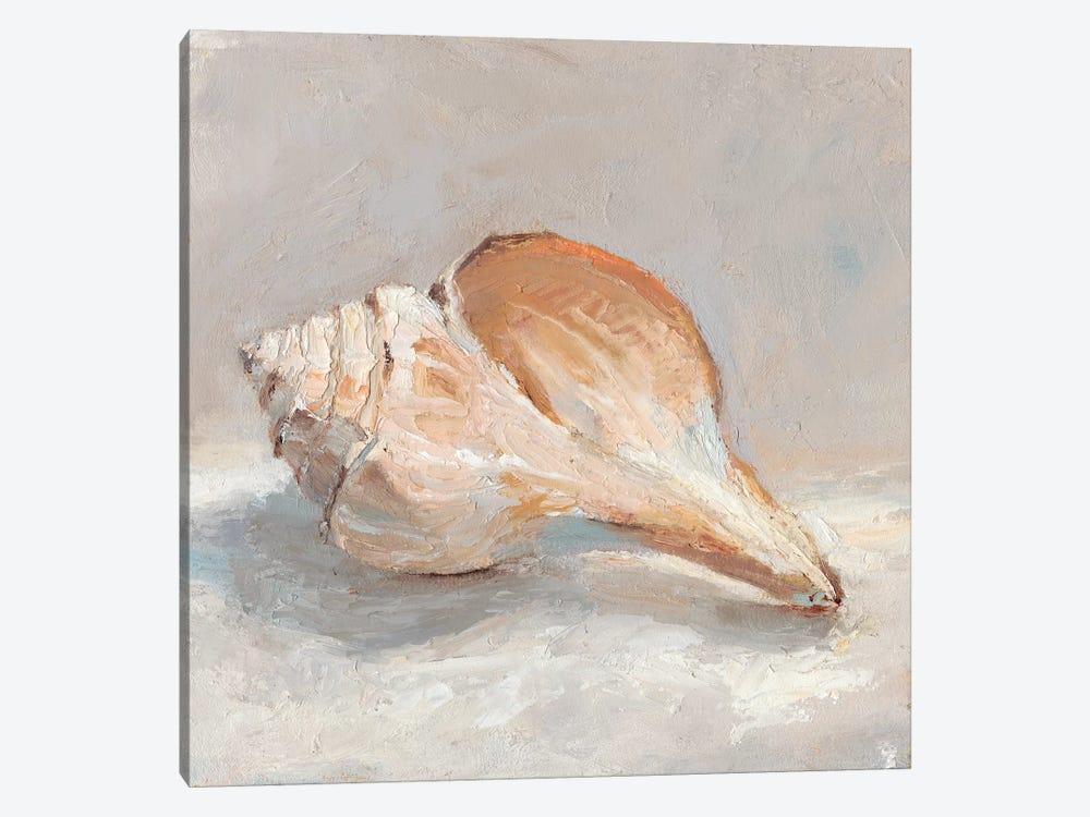 Impressionist Shell Study III by Ethan Harper 1-piece Canvas Artwork