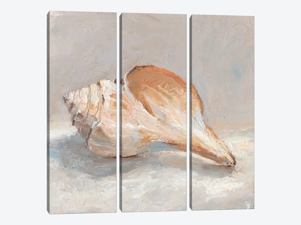 Impressionist Shell Study III by Ethan Harper 3-piece Canvas Wall Art