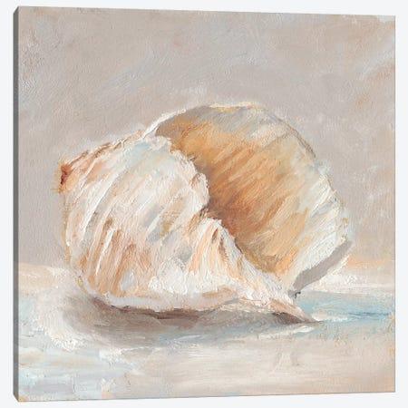 Impressionist Shell Study IV Canvas Print #EHA577} by Ethan Harper Art Print