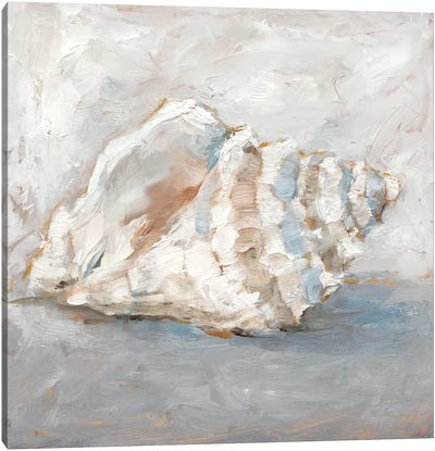Blue Shell Study II Canvas Art Print