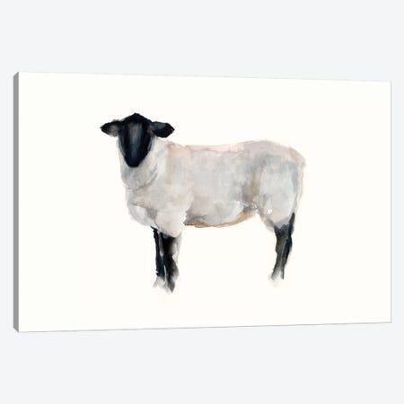 Farm Animal Study I Canvas Print #EHA688} by Ethan Harper Canvas Wall Art