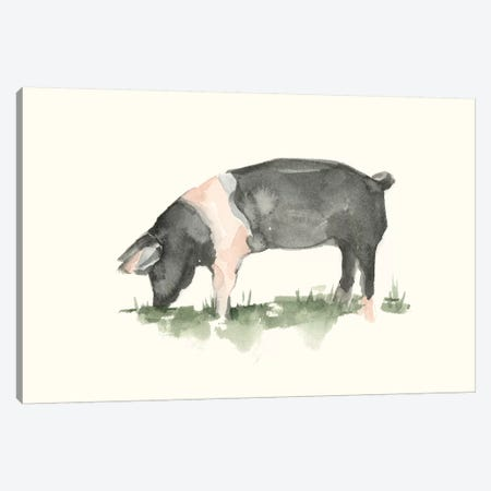 Grazing Farm Animal IV Canvas Print #EHA858} by Ethan Harper Art Print