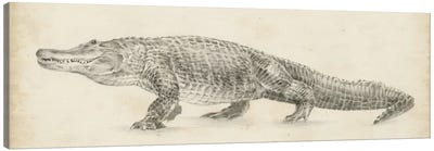 Alligator Sketch Canvas Art Print