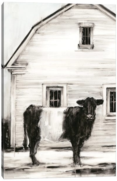 Belted Galloway I Canvas Art Print