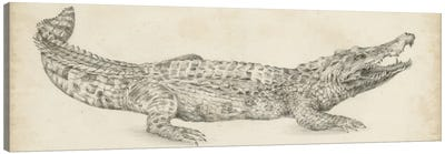 Crocodile Sketch Canvas Art Print
