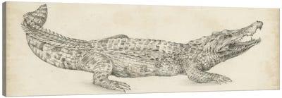 Crocodile Sketch Canvas Art Print