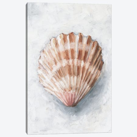 White Shell Study IV Canvas Print #EHA918} by Ethan Harper Canvas Art