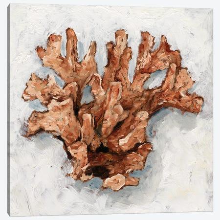 Coral Display I Canvas Print #EHA923} by Ethan Harper Art Print