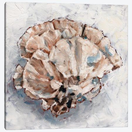Coral Display III Canvas Print #EHA925} by Ethan Harper Canvas Art