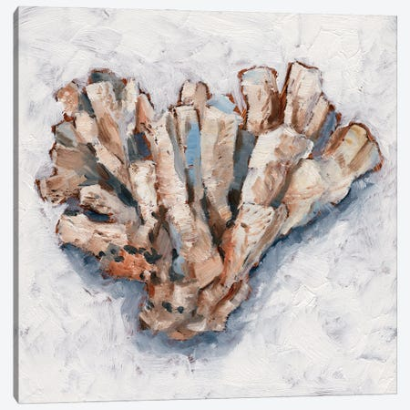 Coral Display IV Canvas Print #EHA926} by Ethan Harper Canvas Art