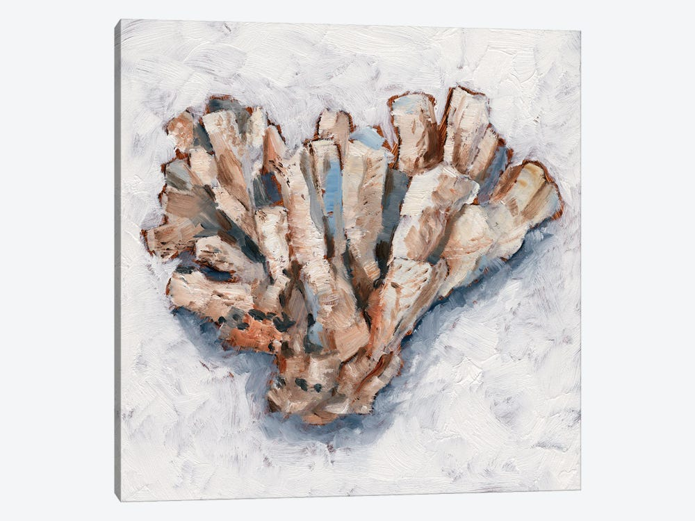 Coral Display IV by Ethan Harper 1-piece Canvas Art Print