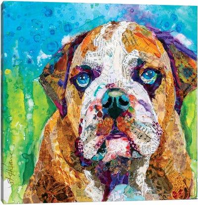 Bull Dog Canvas Art Print