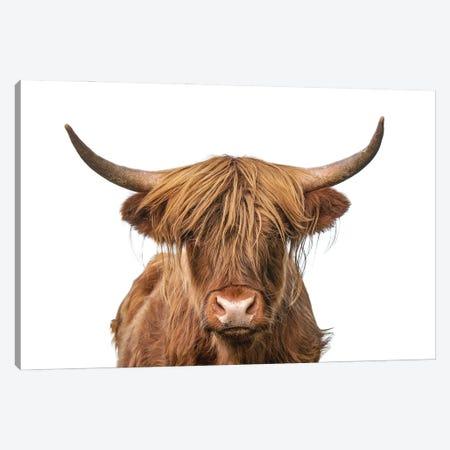 Highland Cow Headshot Canvas Print #EHS11} by Unknown Artist Canvas Artwork