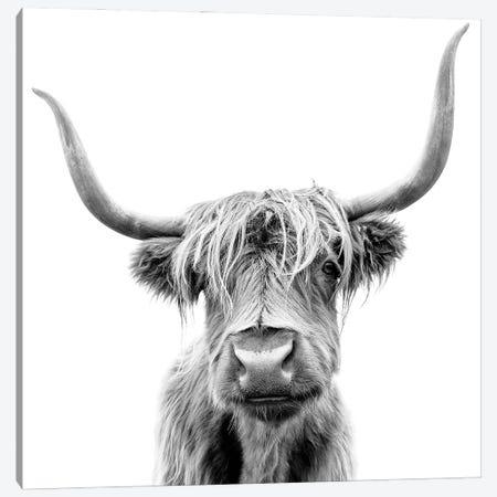 Scottish Highland Cattle In Black & White Canvas Print #EHS15} by Unknown Artist Canvas Art Print