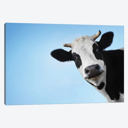 Smiling Black and White Cow On Blue  Canvas Print #EHS16} by Unknown Artist Art Print