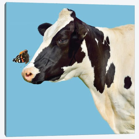 Cow With Butterfly On Her Nose Canvas Print #EHS8} by Unknown Artist Canvas Print