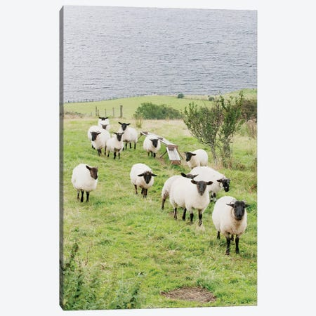 A Flock Of Scottish Blackface, County Donegal, Ulster Province, Republic Of Ireland Canvas Print #EIB1} by Daniel Schreiber Canvas Wall Art