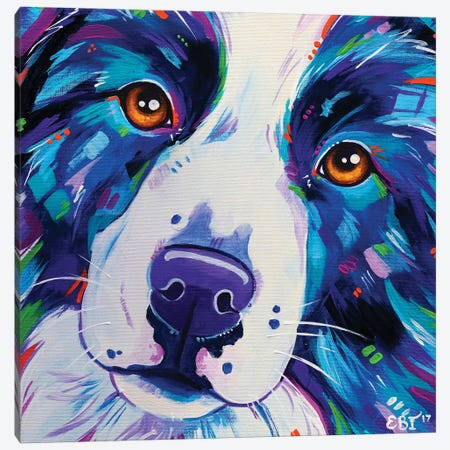 Collie Close Up Canvas Print #EIZ15} by Eve Izzett Canvas Print
