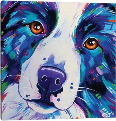 Collie Close Up Canvas Art Print
