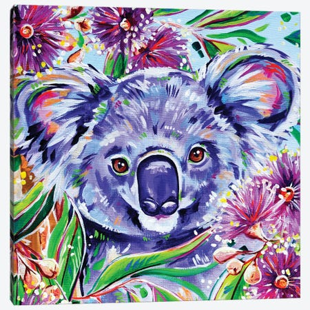 Koala Square Canvas Print #EIZ23} by Eve Izzett Canvas Print