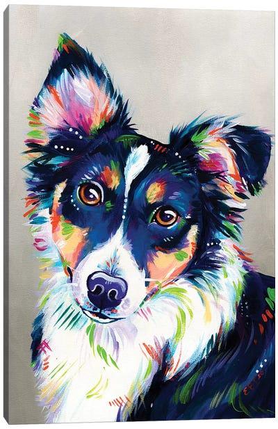 Holly - Border Collie Portrait Canvas Art Print