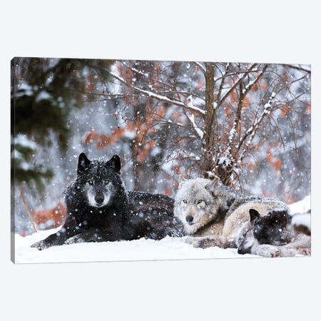 Family Portrait Canvas Print #EJT12} by Eiji Itoyama Canvas Art