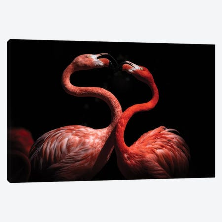 Flamingos Canvas Print #EJT14} by Eiji Itoyama Canvas Print