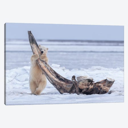My Favorite Tooth Pick Canvas Print #EJT2} by Eiji Itoyama Canvas Wall Art
