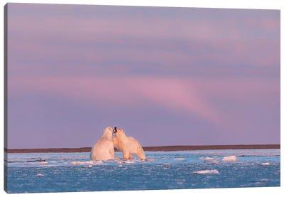 Arctic Color Canvas Art Print