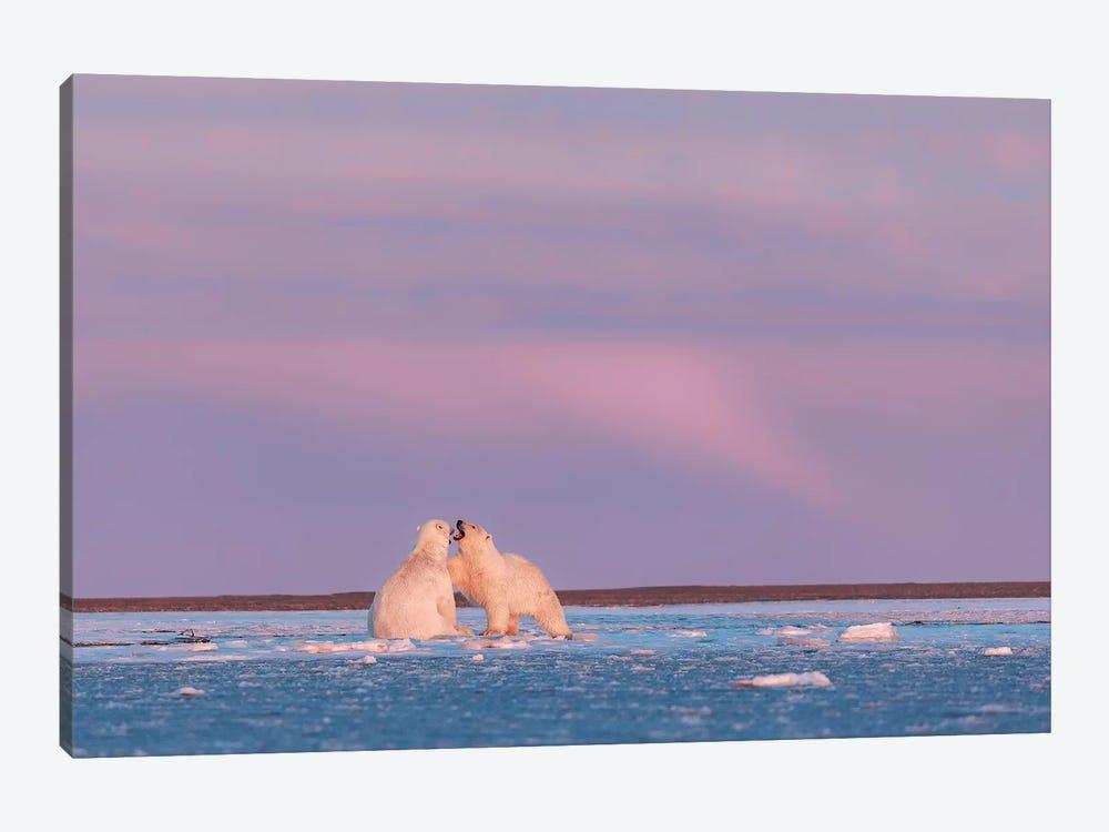 Arctic Color by Eiji Itoyama 1-piece Art Print
