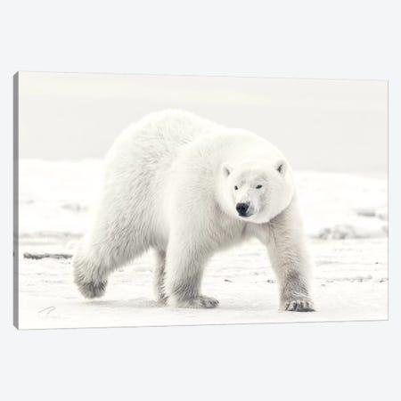 Alaskan King Canvas Print #EJT5} by Eiji Itoyama Canvas Print