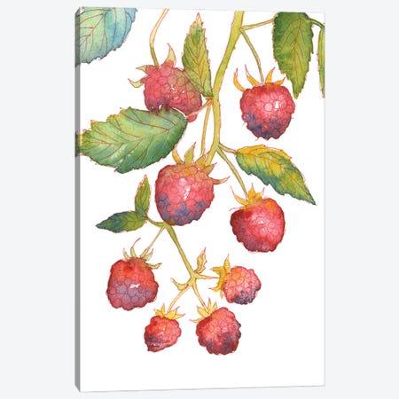Raspberry Branch Canvas Print #EKP66} by Ekaterina Prisich Art Print