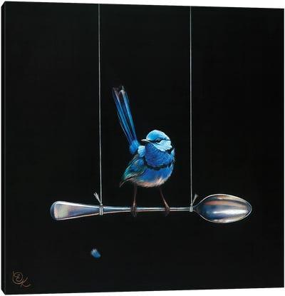 Spoon Perch (Splendid Fairy-Wren) Canvas Art Print