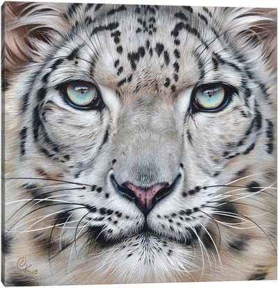 Faces Of The Wild - Snow Leopard Canvas Art Print