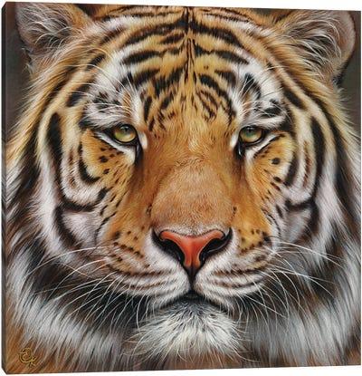 Faces Of The Wild - Amur Tiger Canvas Art Print