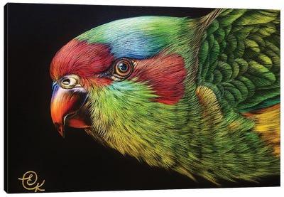 Musk Lorikeet Canvas Art Print