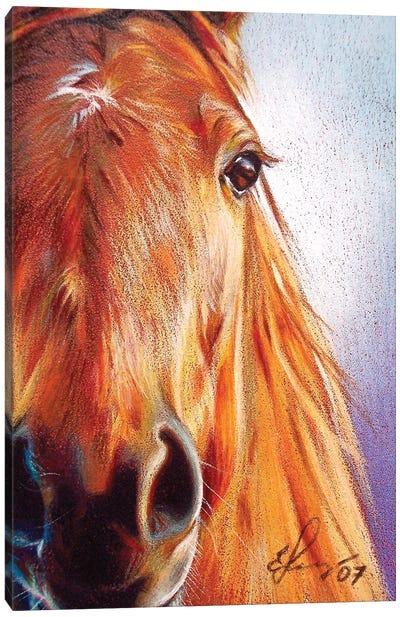 Chestnut Canvas Art Print