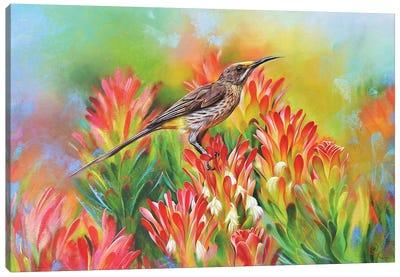 Among Proteas - Cape Sugarbird Canvas Art Print