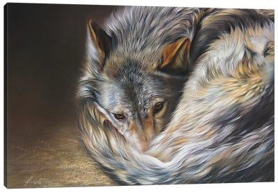 Watchful Rest (Grey Wolf) Canvas Art Print