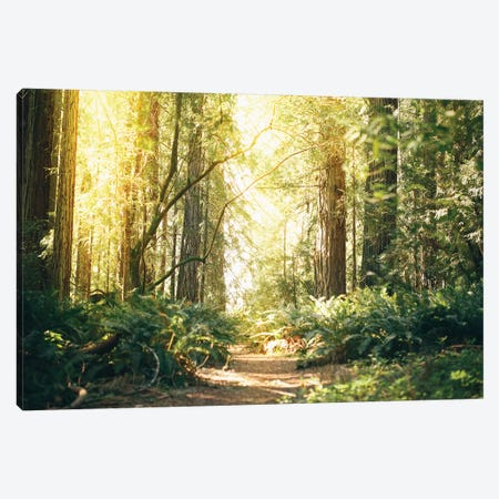 California Redwoods Path Canvas Print #EKU13} by Elena Kulikova Canvas Wall Art