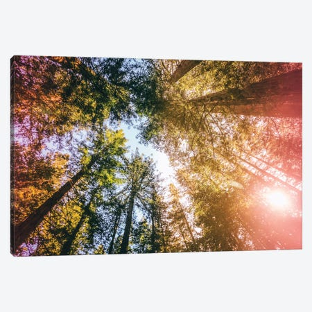 California Redwoods, Sun-rays, and Sky Canvas Print #EKU14} by Elena Kulikova Canvas Art Print