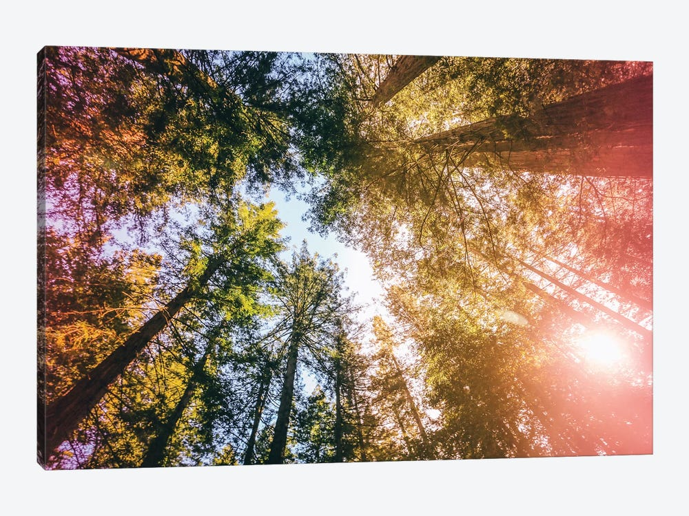 California Redwoods, Sun-rays, and Sky by Elena Kulikova 1-piece Art Print