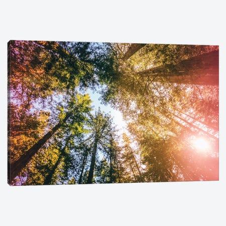 California Redwoods, Sun-rays, and Sky 3-Piece Canvas #EKU14} by Elena Kulikova Canvas Art Print