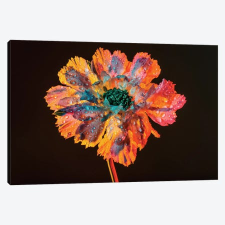 Dewy Bloom Canvas Print #EKU19} by Elena Kulikova Canvas Artwork