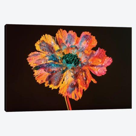 Dewy Bloom 3-Piece Canvas #EKU19} by Elena Kulikova Canvas Artwork