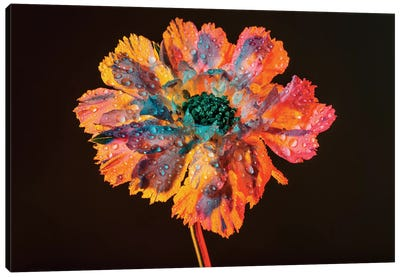 Dewy Bloom Canvas Art Print