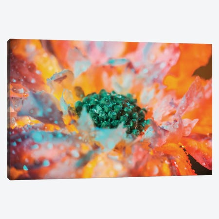 Dewy Flower In Full Bloom Canvas Print #EKU20} by Elena Kulikova Canvas Print